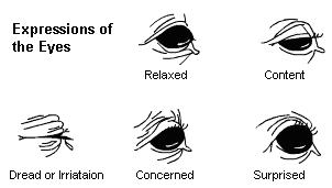 Horse eye emotion 1.JPG